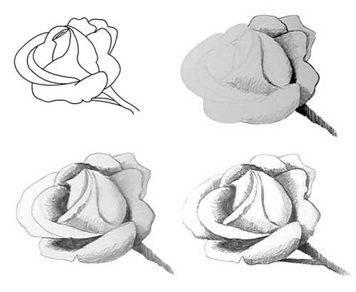 карандаше рисунок в цветы в тени